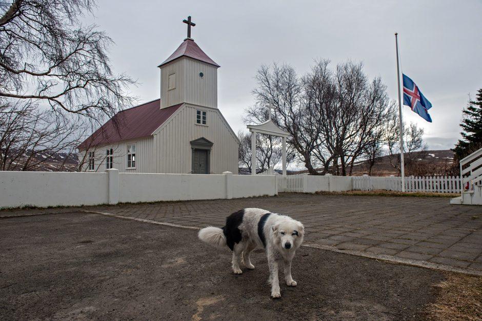 un cane e una tipica chiesa islandese lungo la Hringvegur in Islanda